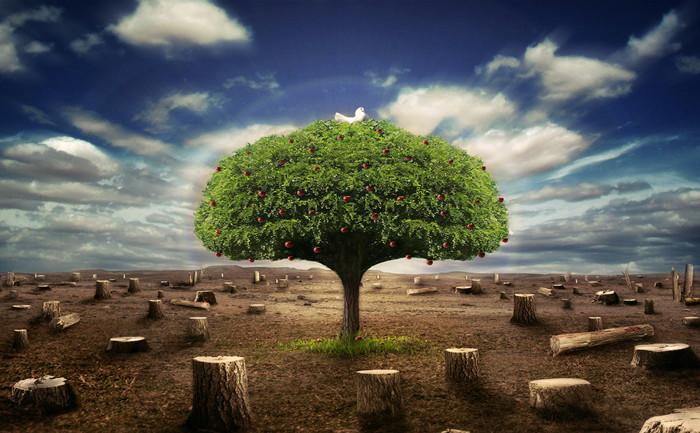 保护环境,呵护地球.jpg